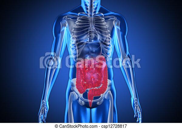 humain, numérique, bleu, système, digestif, mis valeur - csp12728817