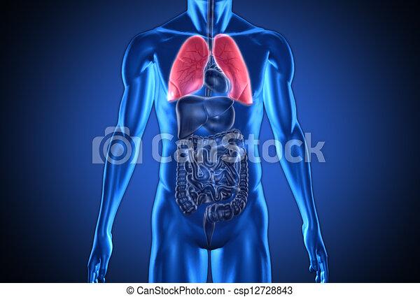 humain, numérique, mis valeur, bleu, poumons, rouges - csp12728843