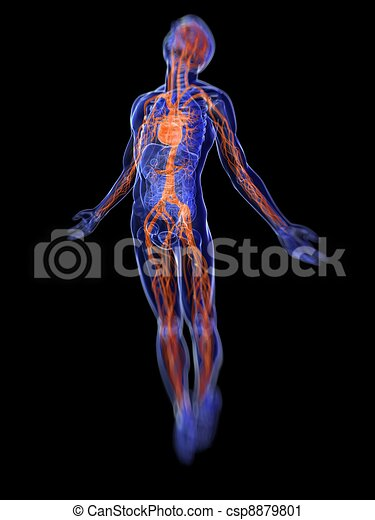 Human Anatomy 3d Rendered Medical Illustration Of The Clipart