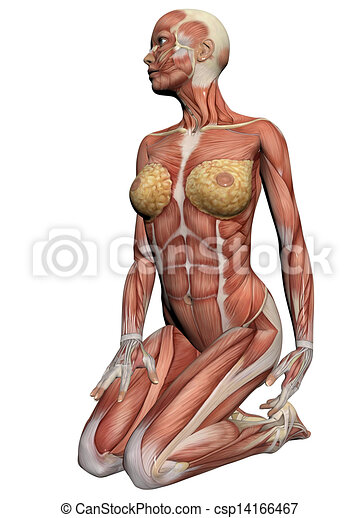 Human Anatomy Female Muscles Made In 3d Software
