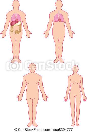 Human anatomy - csp8394777