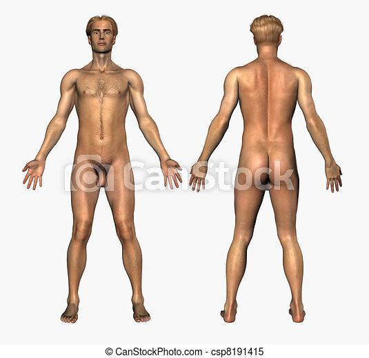 male model Adult