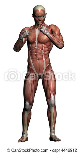 Human Anatomy Male Muscles Made In 3d Software