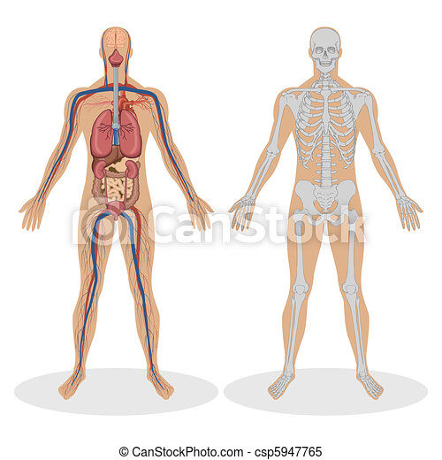 Human Anatomy of man - csp5947765
