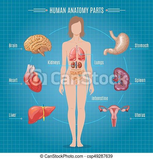 Human Anatomy Parts Infographic Concept Human Anatomy Parts