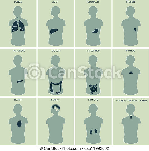 Human anatomy parts - csp11992602