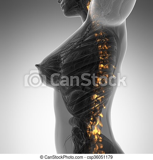 Human backache and back pain with an upper torso body skeleton showing the spine and vertebral column - csp36051179
