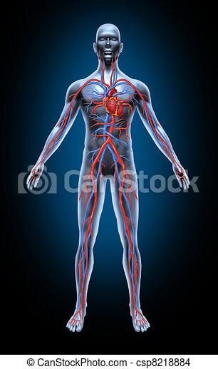 Human Blood Circulation - csp8218884