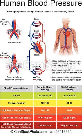 Human Blood Pressure Blood Pressure Bp Is The Pressure Of