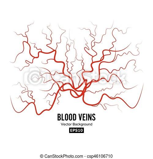 Human Blood Veins Vector Red Blood Vessels Design Illustration