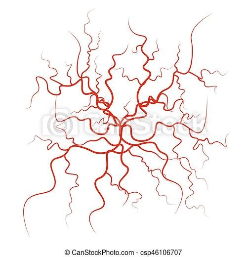 Human Blood Veins Vector Red Blood Vessels Design Vector