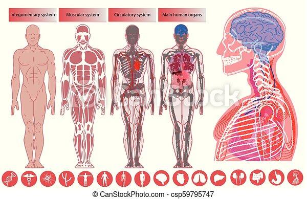 Human body anatomy, Medical Education