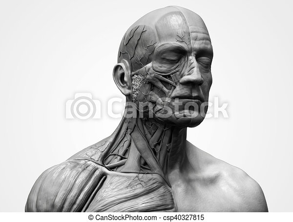 Human Body Anatomy Of A Male Head And Torso Anatomy Human Head And Shoulder Muscular Anatomy In 3d Render In Black And