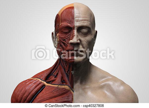 Human Body Anatomy Of A Male Human Anatomy Muscle Anatomy Of The
