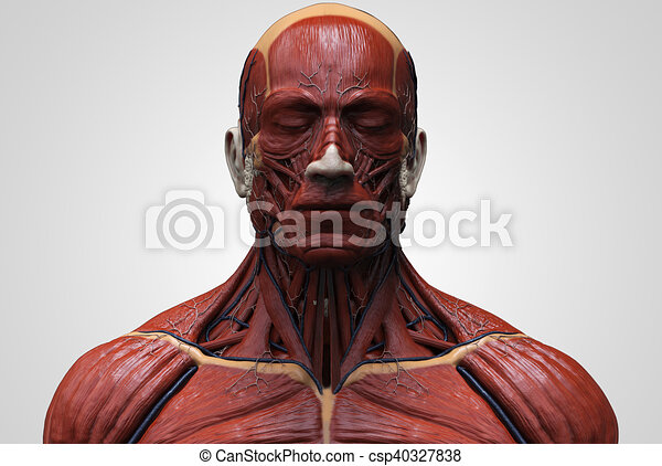 Muscular Bodies References Art