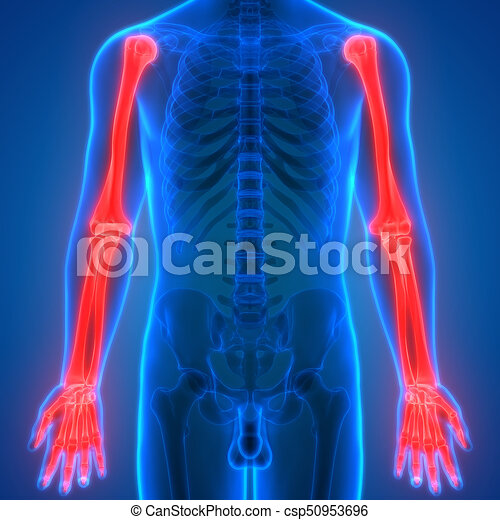 3d Illustration Of Human Body Bone Joint Pains Anatomy Hand Joints