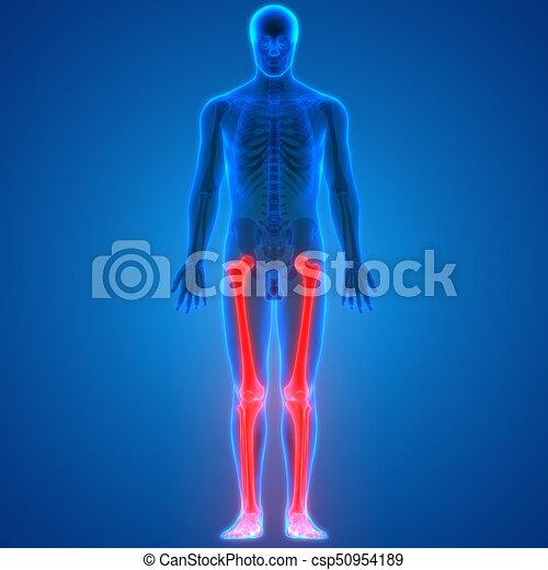 3d Illustration Of Human Body Bone Joint Pains Anatomy Leg Joints