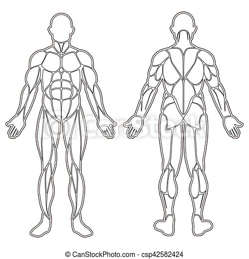 human body muscles silhouette  human body silhouette with