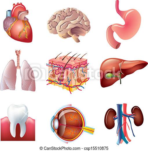 human body parts vector set - csp15510875