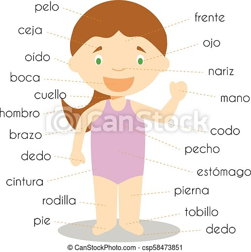 Human body parts vocabulary in spanish vector illustration human body parts vocabulary in spanish vector illustration ccuart Image collections