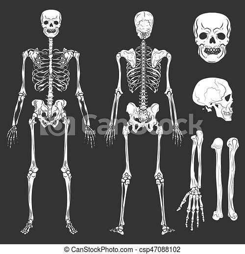 Human body skeleton bones and joints vector isolated flat icons ...