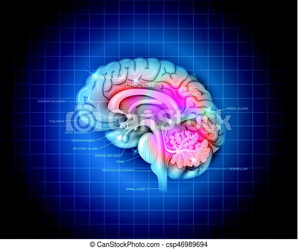 Human brain detailed 3d illustration on a blue radial eps vectors human brain csp46989694 ccuart Choice Image