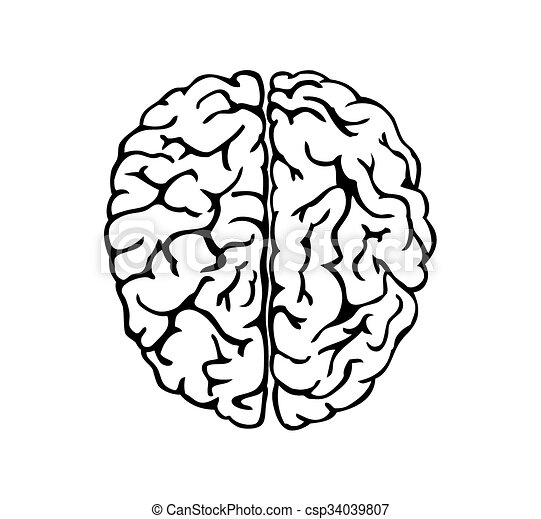 human brain for medical design or idea of logo vector vector rh canstockphoto ie brain vector png brain vector illustration