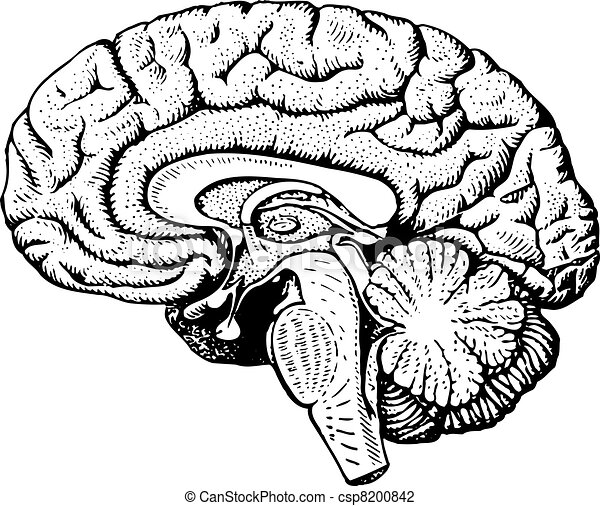 Human brain human brain on white background vector illustration human brain csp8200842 ccuart Images