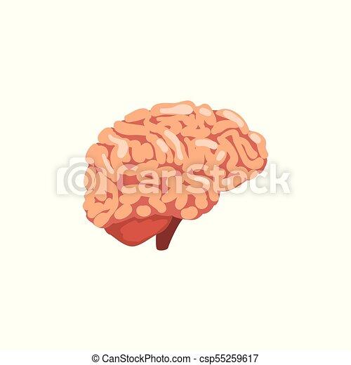 Human Brain Internal Organ Anatomy Vector Illustration On A