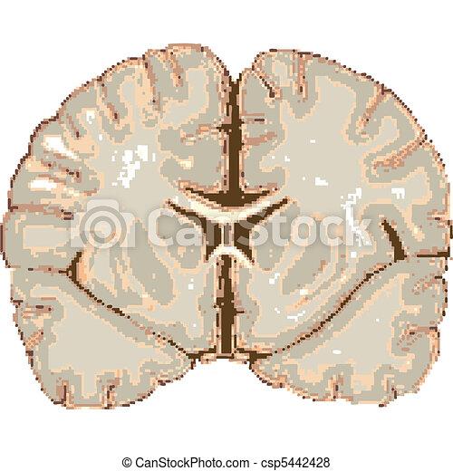 human brain isolated on white - csp5442428