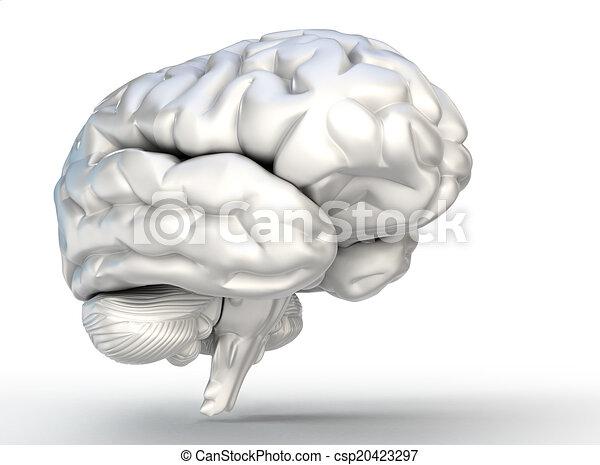 human brain model on white background - csp20423297