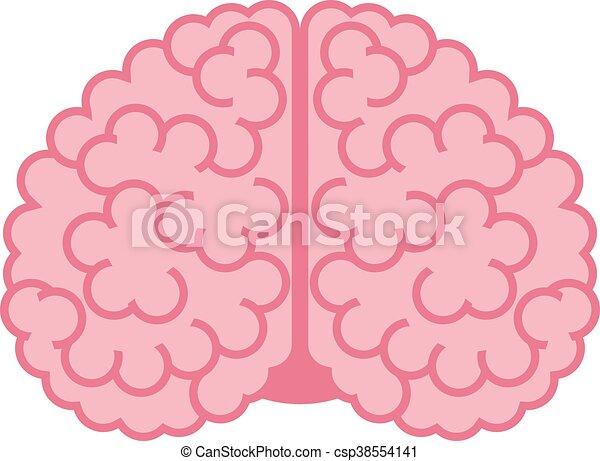 Human brain on white - csp38554141
