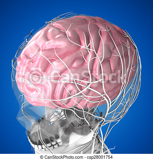 Human brain the human brain has many properties that are common to human brain csp28001754 ccuart Images