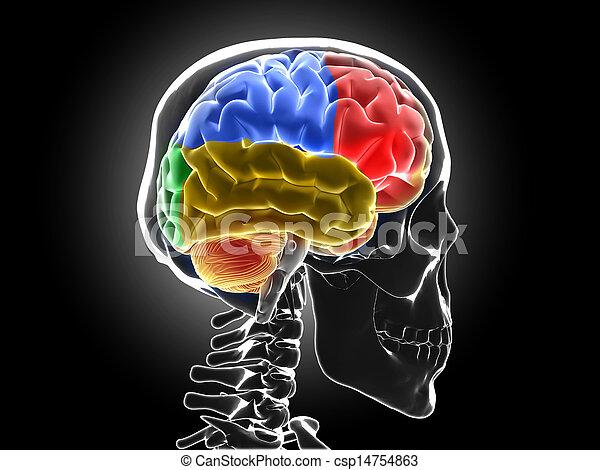 human brain - csp14754863