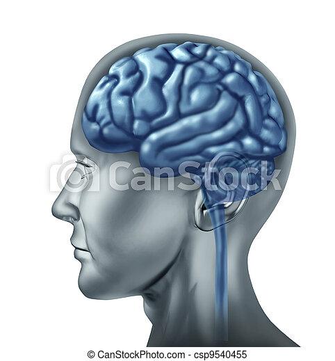 Human brain - csp9540455
