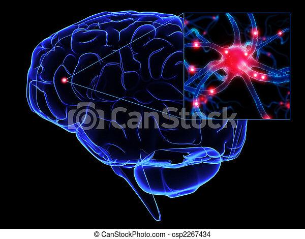 human brain - csp2267434
