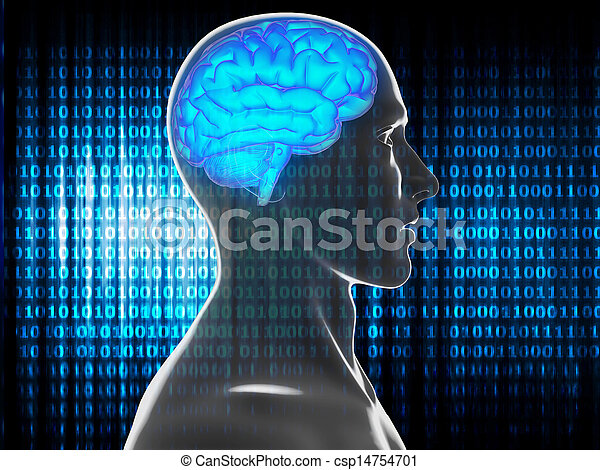 human brain - csp14754701
