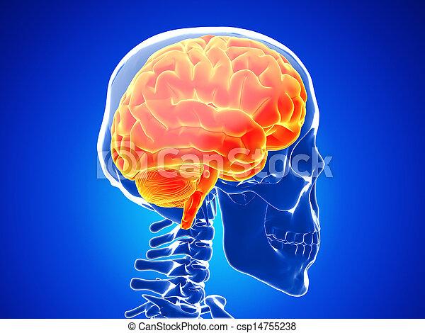 human brain - csp14755238