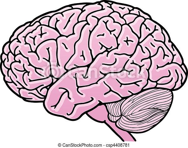 vector illustration of a human brain vector clip art search rh canstockphoto com clip art brain cartoon clip art brainstorming