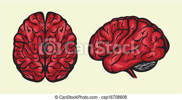 human brain - csp16708608