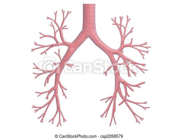 human bronchi - csp2269579