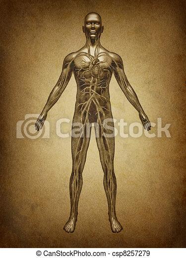 Human Circulation Grunge - csp8257279