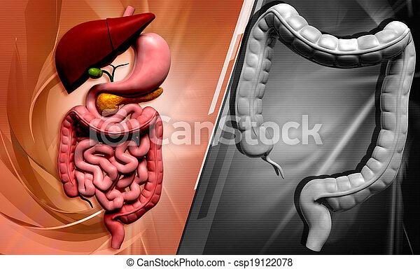 human digestive system - csp19122078