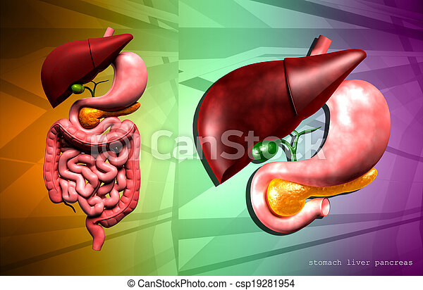 human digestive system - csp19281954