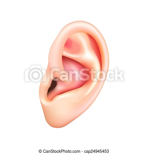 Human ear isolated on white vector - csp24945453