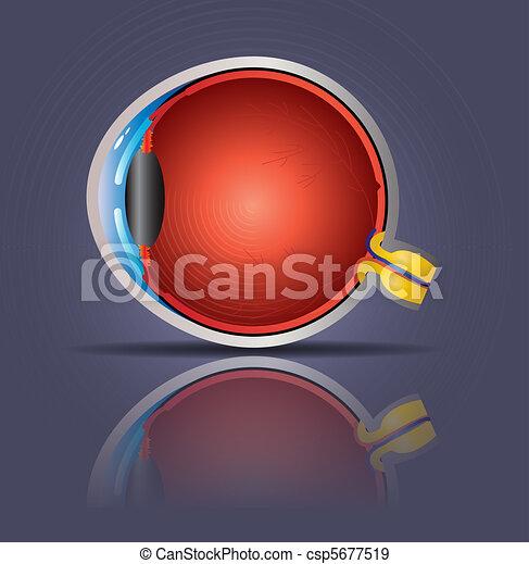 Human eye - csp5677519