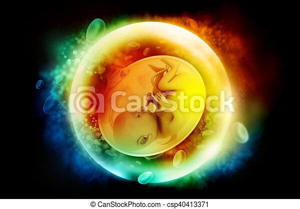 Human fetus - csp40413371