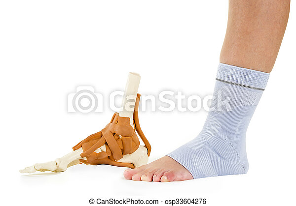 Human Foot In Ankle Brace And Skeletal Model Profile Of Picture