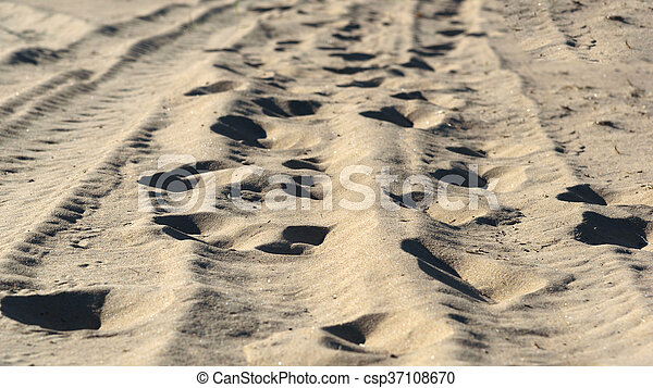 human footprints on the beach sand in forest - csp37108670