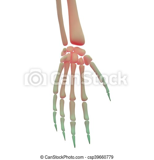 3d Illustration Of Human Hand Bones Anatomy Stock Illustrations